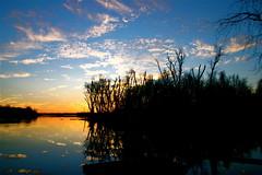 Clouds In The Water ⅩⅣ (mightyquinninwky) Tags: trees sky water clouds reflections evening december kentucky lexingtonky richmondroad fayettecounty centralkentucky ellserlielake