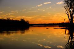 Clouds In The Water Ⅶ (mightyquinninwky) Tags: trees sky water clouds reflections evening december kentucky lexingtonky richmondroad fayettecounty centralkentucky ellserlielake