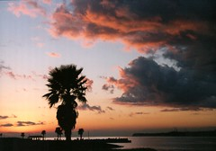 sunset_tree_2