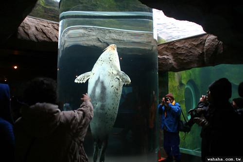 旭山動物園.海豹