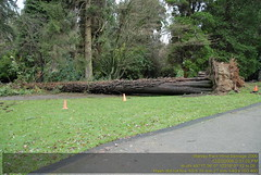 Stanley Park Wind Storm 2006 VFK_8722.JPG (vfk) Tags: park trees canada storm vancouver geotagged wind destruction 2006 columbia stanley damage british geolon123133333333333 geolat492993333333333