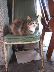 1-當初就是在這張破椅子上發現牠