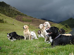 Border Collie - Labrador - Husky Siberiano - Pointer Ingls - Setter Ingls - Pointer Alemn (Kyroph) Tags: pictures dog mountain dogs animal collie husky labrador shot pointer border can perro pack perros siberian setter fotografa neusa