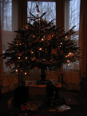 Christmas tree in the evening