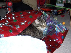 Bonnie Gift Wrapped 2
