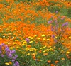 Flowers - Wine Country Oregon (pomegranatecreations) Tags: bestnaturetnc06