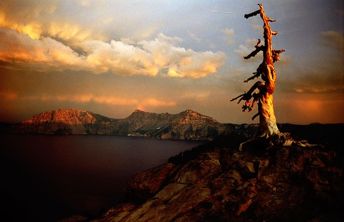 dead tree at crater lake