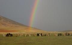 rainbow sheep (orana) Tags: sky mountains peru set photo rainbow shoot sheep cusco gray herd