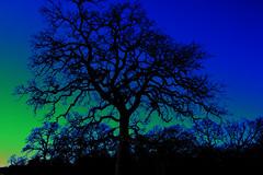 A Solarized Surprise (Jeff Clow) Tags: color tree sunrise bravo searchthebest explore dfw solarized jeffclow mywinners abigfave artlibre photoshopelements50