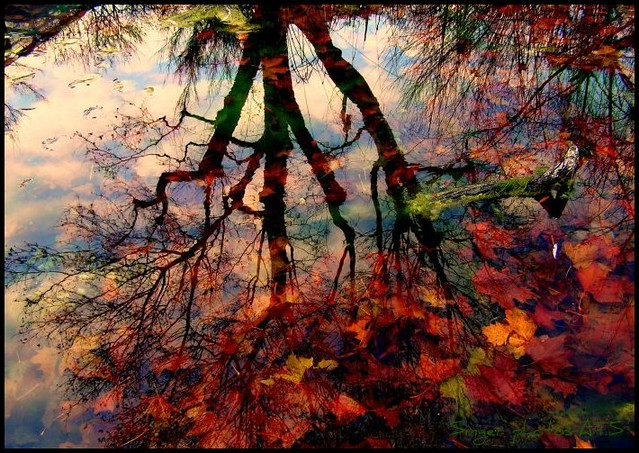 autumn reflection...