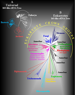 Universal 16S-like rRNA Tree