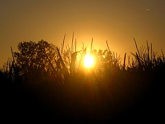 Just when you think you've got it all figured out...... (multi_everything) Tags: sunset sky sun tree nature field silhouette plane ilovenature twilight corn glow bosnia zen moment bliss eternity plain cdp