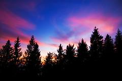 # Rosa # (drmauro) Tags: wood pink trees sky italy nature alberi clouds landscape nikon tramonto d70 horizon rosa natura cielo va ita dslr montagna varese paesaggio sera bosco crepuscolo orizzonte nubi campodeifiori cdf abeti cirri osservatorioastronomico utatafeature drmauro ©maurodelromano maurodelromano