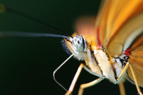Mariposa 07