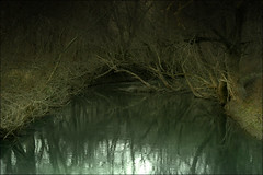 River (ILINA S.) Tags: trees reflection green nature water forest river dark daylight day ominous branches ilinas