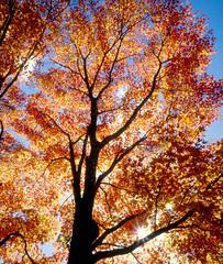 Glorious autumn (Ken Schwarz) Tags: japan foliage travelerphotos