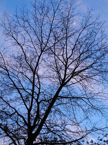 Tree, Sky, Moon