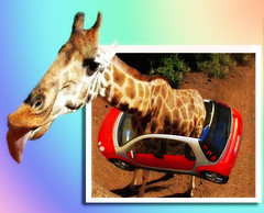 Ever see a car too small for the driver?  ~(Downunder.Challenge 24)~ (Gravityx9) Tags: animal photoshop adobephotoshop ride chop troll multicolored h1 wowie magical challenge imagemanipulations downunder duc globalvillage amer 0107 blogthis smartcars oob smorgasbord outofframe withoutrules photoshopplayer 123faves psart funwithphotoediting hdrgroup spotthis trickerygroup digitalgallery2 letsshop 012507 du24 wowiekazowie eyecandyart photoshopmasterpiece pscs2group rotrosso allkidnsofbeauty sensationalcreations amazingfeatsinps
