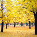 Yellow in the fall - by six steps 