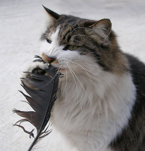 Image of a cool cat eating crow