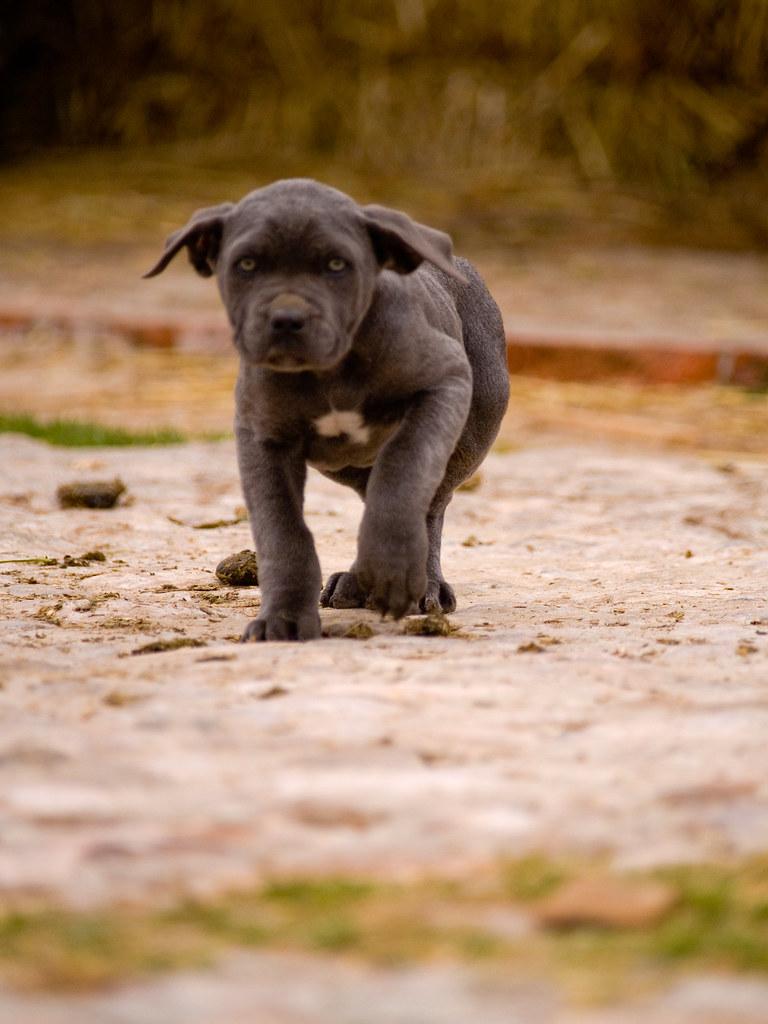 Puppy romp