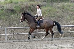 IMG_2392 (montalgeto) Tags: horse gallop parome