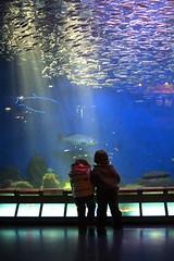 amigos para siempre (briveira) Tags: children aquarium spain corua underwater nios galicia acuario finisterrae briveiracom