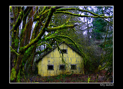 Hobbit House (Bonell Photography (dasbull)) Tags: light usa house color colour art texture tourism nature beautiful beauty yellow contrast work dark real fun lumix us photo washington moss amazing cool fantastic artwork flickr niceshot shot angle natural northwest image awesome feel great joy perspective picture atmosphere location dirty best sharp panasonic frame passion pacificnorthwest pro northamerica wa washingtonstate hobbit pnw hardwork tone borders authentic exciting generic scarry 2007 fz50 amature joyfull lebam dmcfz50 panasonicdmcfz50 dasbull ronbonell