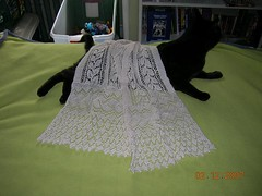 Lace on Cat