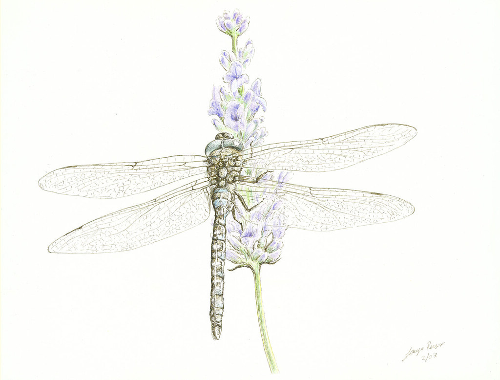 artist: <ARTIST_NAME_META> <ALT_TAGS> Dragonfly on lavender