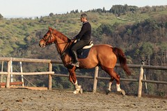 IMG_2527 (montalgeto) Tags: horse quick cristian gallop