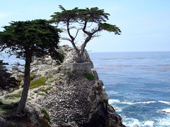17 mile drive (Donna Franc) Tags: ocean california sea usa sun tree alberi america ilovenature monterey honeymoon mare may 2006 17miledrive sole giugno breathtaking maggio juny pini lunadimiele viaggiodinozze blueribbonwinner supershot 35faves 25faves aplusphoto ocano wowiekazowie ysplix lonelycipress naturewatcher bachspicsgallery peachofashot 5peaches thegalleryoffinephotography