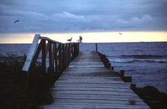 Trelleborg - Baltic Coast (Lucio José Martínez González) Tags: travel viaje geotagged coast sweden seagull baltic sverige suecia trelleborg helluva skane baltico 50club luciojosémartínezgonzález escania luciojosemartinezgonzalez holidaysvacanzeurlaub geo:lat=5536249 geo:lon=13209042