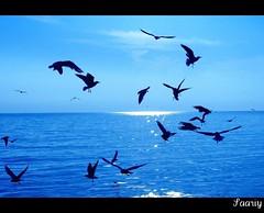 Free Seagulls (*Saariy*) Tags: sea sky sun seagulls birds canon turkey relax trkiye istanbul turquie shore soe turquia turchia turkei naturesfinest supershot instantfave flickrsbest canonpowershota700 anawesomeshot colorphotoaward impressedbeauty ysplix saariysqualitypictures