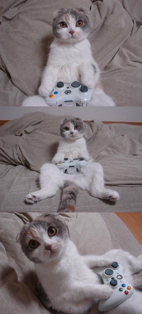 Xbox 360 cat