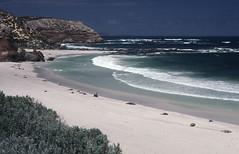 199101 056 Kangaroo Island