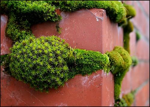 moss on brick