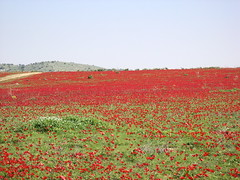 Over A Blood Red Field (galileog) Tags: bloodred