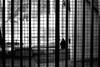 On the low wall (pascalcolin1) Tags: paris13 mur muret femme woman grilles photoderue streetview urbanarte noiretblanc blackandwhite photopascalcolin