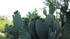 IMG_4242 (BadBunnny) Tags: nature naturaleza wild salvaje flowers flores flor flower cactus fire fuego circus circo malabares juggling mountain montañas snow nieve sky cielo