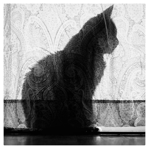 "Paisley Cat • <a style=""font-size:0.8em;"" href=""http://www.flickr.com/photos/150185675@N05/31627215616/"" target=""_blank"">View on Flickr</a>"
