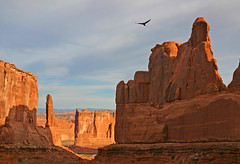 Raven Over Arches National Park Ravin' Over Arches National Park (Beefus) Tags: southwest bird nature sunrise landscape utah ut scenery arches whoa archesnationalpark raven archs parkavenue