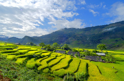 Sapa Rice Field