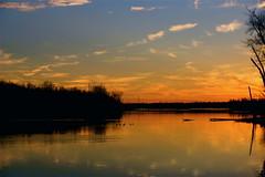 Clouds In The Water ⅩⅨ (mightyquinninwky) Tags: trees sky water clouds reflections evening december kentucky lexingtonky richmondroad fayettecounty centralkentucky ellserlielake