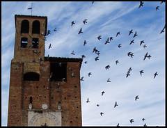 Piccioni (Sartori Simone) Tags: italien italy geotagged europa europe italia italie piove veneto sacco skypage allrightsreserved 1on1objects italiamedievale piovedisacco italianbelltowers saccisica simonesartori