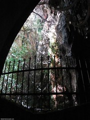 THE tree in Chak Chak