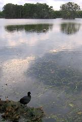 Looking Out II 20061213 (Abhiks) Tags: dec13 2006365