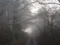 Frosty Lane (R-V-P) Tags: road winter england mist weather fog haze frost track bend buckinghamshire fourseasons precipitation burnhambeeches