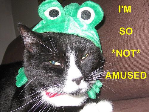 Little Bijou Kitty - he's not amused!