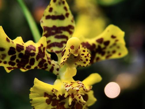 Прикольные фотографии: орхидеи-пришельцы